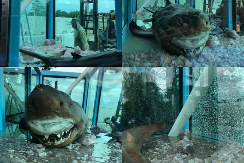 tiburon abandonado