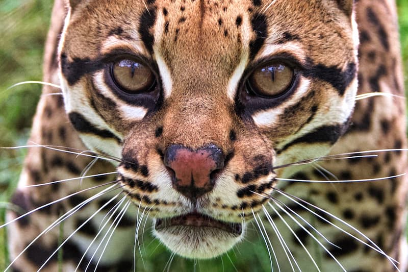 gatos fascinantes(2)