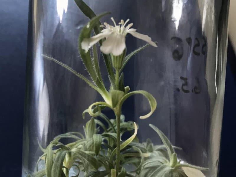 planta del pleistoceno