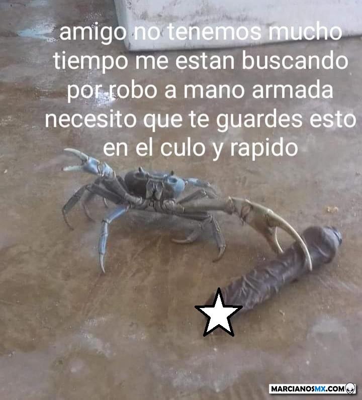 Marcianadas 496 200821001523 (255)