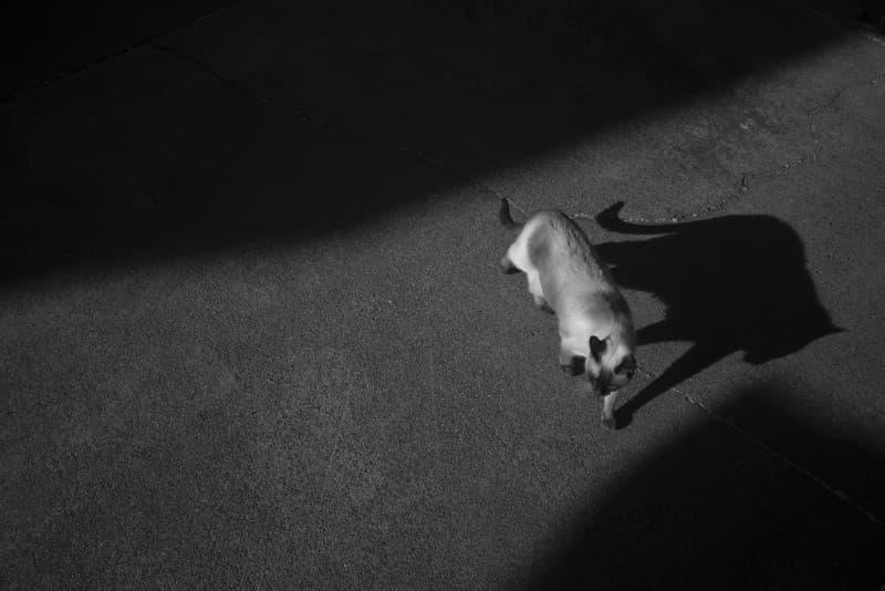 gato caminando en la oscuridad