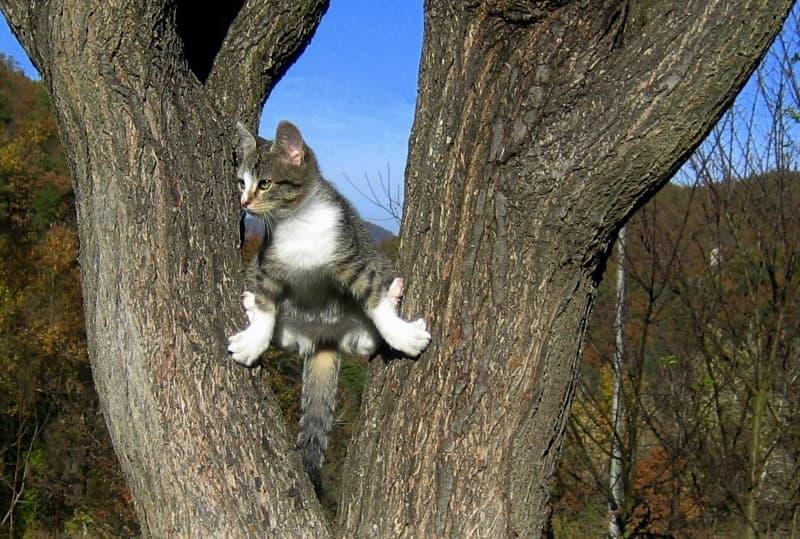 gato escalando un arbol