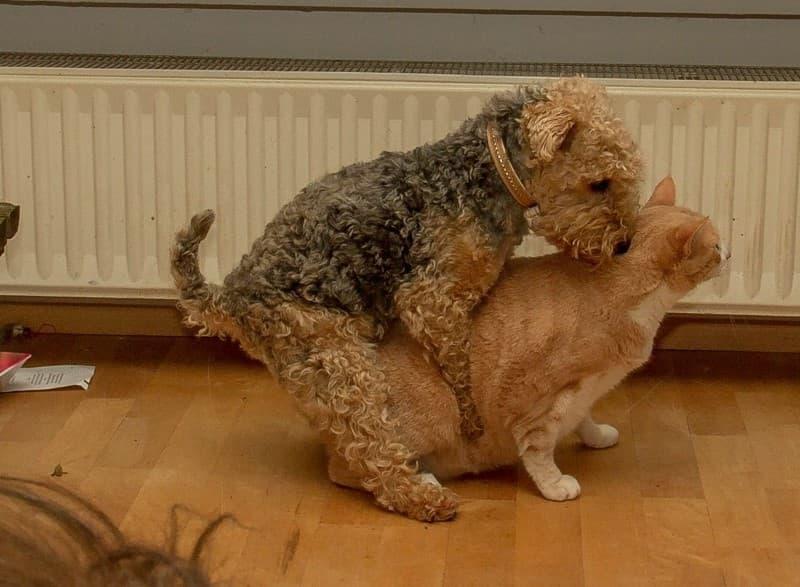 gato o perro que prefieres