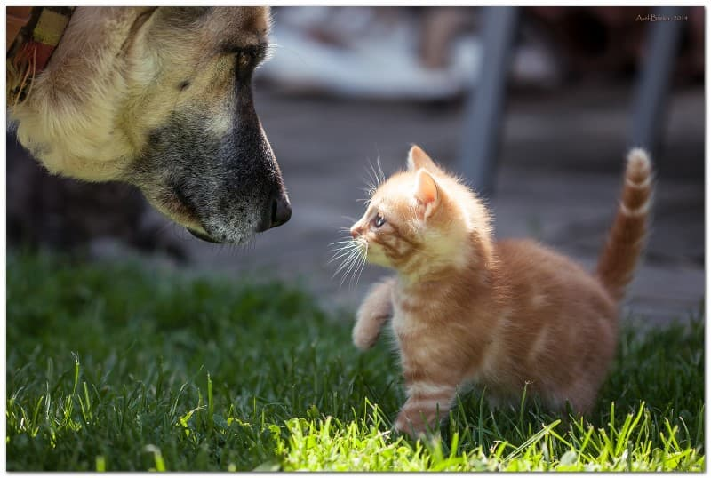 gato pequeño y perro grande