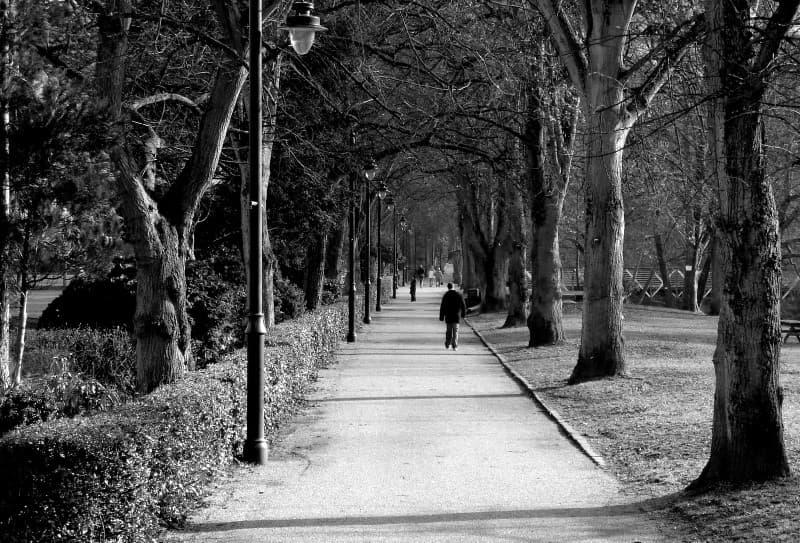 solitario en el parque